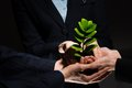 Sprout in hands Royalty Free Stock Photo
