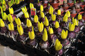 Sprout hyacinth selling in the flower market Royalty Free Stock Photo