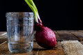 Sprout of onion in water Royalty Free Stock Photo