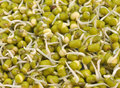 Sprouted seeds close up pile of moong Royalty Free Stock Images