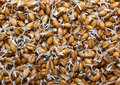 Sprouted Wheat Grains.