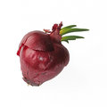Sprouting onion isolated on white red Royalty Free Stock Images
