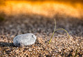Sprouting plant and small stone Stock Image