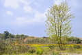 Sprouting tree before flowering rape fields at sunny spring noon a the chengdu china Stock Photography