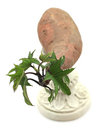 Sprouting yam on a pedestal with leaves isolated white background Stock Image