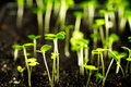 Sprouts growing out of the ground and reach for the light Stock Images