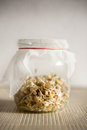 Sprouts in jar growing glass Royalty Free Stock Photography