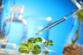 Sprouts on test tube scientist examining samples with plants Royalty Free Stock Image