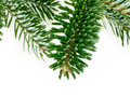 Spruce Stock Photography