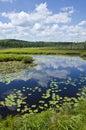 Spruce Bog Stock Images
