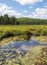 Spruce Bog at peak Summer Growth.