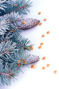 Spruce branch with hoar frost christmas theme frame of decorate gold stars and fir cone closeup on white background Royalty Free Stock Photos