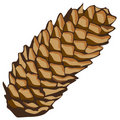 Spruce cone Stock Photos