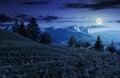 Spruce forest on grassy hillside in tatras at night