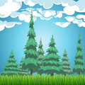 Spruce forest nature landscape