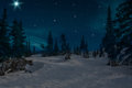Spruce forest night snow stars Royalty Free Stock Photo