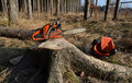 Spruce stump, chainsaw, forest Royalty Free Stock Photography
