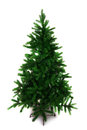 Spruce tree for christmas Stock Photography