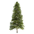Spruce tree isolated on white Stock Photo