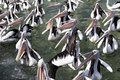 Squabbling pelicans On the coast in Australia Royalty Free Stock Photo