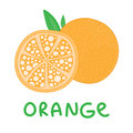 Square card with hand drawn orange fruit vector. Abstract sliced and whole orange with leaf on white background.