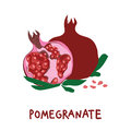 Square card with hand drawn pomegranate and leaves. Colorful illustration