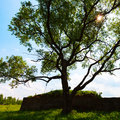 Square dramatic tree with sun Royalty Free Stock Photo