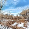 Square frame Brown grasses and trees with leafless branches on snow covered land in winter Royalty Free Stock Photo