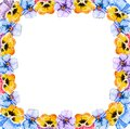 Square frame of watercolor blooming tricolor violet viola pansy flowers on a white background with copy space for text in the