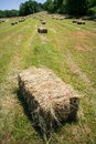 Square hay bales lay in a freshly mowed field Royalty Free Stock Images
