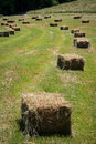 Square hay bales lay in a freshly mowed field Stock Photography