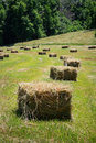 Square hay bales lay in a freshly mowed field Stock Photo