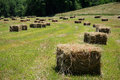 Square hay bales lay in a freshly mowed field Stock Image