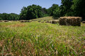 Square hay bales lay in a freshly mowed field Royalty Free Stock Photos