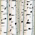 Square illustration of trunks birches. Royalty Free Stock Images