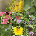 Square summer collage with insects on flowers