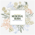 Square text field with hand-drawn colored medicinal herbs and flowers