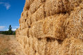 Squared bales of straw Stock Image