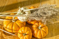 Squash background a fall seasonal for halloween with small pumpkins and Royalty Free Stock Images