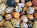 Squash and gourds striped solid color of all shapes sizes piled together Royalty Free Stock Image