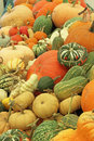 Squashes on a display stall including pumpkins and marrows Royalty Free Stock Photo