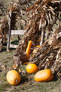 Squashes and dried corn stalks Royalty Free Stock Photo