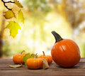 Squashes and pumpkins on shinning fall background rustic wooden boards with an autumn backdrop Stock Photography