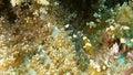 Squat Shrimps