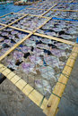 Squid lay on net dried in a idyllic fishermen village Stock Photography