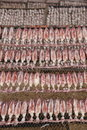 Squid lay on net, Dried Squid, traditional squids drying in the sun in a idyllic fishermen village,Thailand. Royalty Free Stock Photo