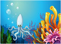 A squid under the sea illustration of on white background Stock Photography
