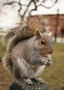 Squirrel 免版税库存照片