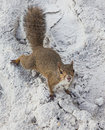 Squirrel on beach Royalty Free Stock Photos
