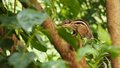 Squirrel on branch on leafy tree